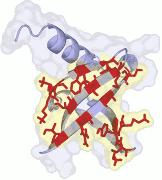 Nanofitins: alternative to antibodie